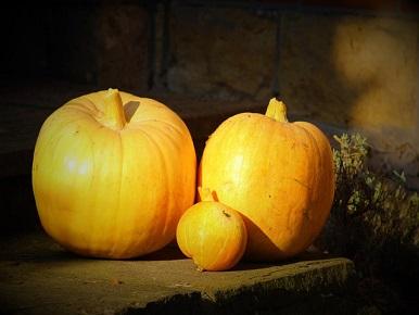 Friends Pumpkin Tasting